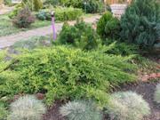 Хвойные и лиственные декоративные растения