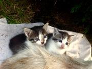 Милые котодети в дар