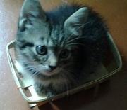 Отдадим котика в хорошие руки